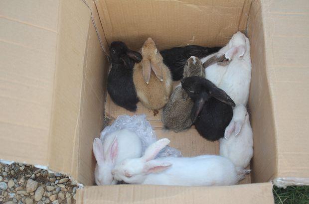Hasta Tavşanları yol kenarında ölüme terk ettiler