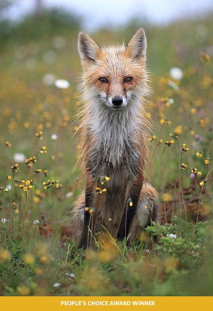 Doğa Fotoğrafları Yarışması sonuçlandı! 2018'in en iyi doğa fotoğrafları!