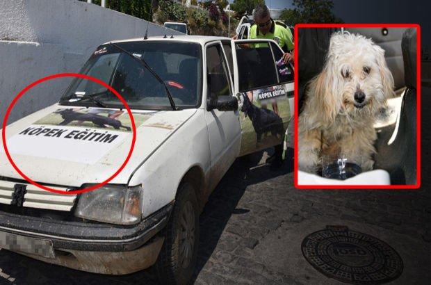 Antalya polisi otomobilde bırakılan köpeği kurtardı