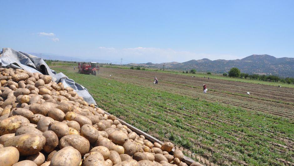 Suriye'den patates ithal edildi, fiyatlar düştü