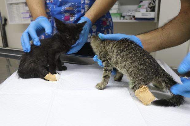 Yalova'da birer ayakları kesilmiş kedi yavruları bulundu