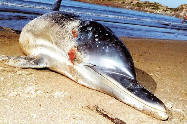 Hayvana şiddet deniz kara dinlemiyor