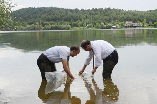 Uşak'ta 100 bin pullu sazan yavrusu göletlere bırakıldı