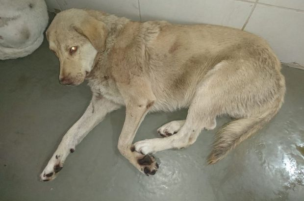 Av tüfekli köpek katliamı