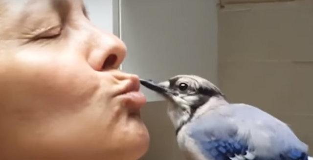 Doğada bakıma muhtaç yavru bir kuş buldular, her şey ondan sonra başladı