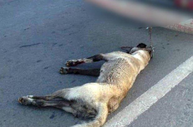 Son dakika: Köpeğe işkence etti! Gözaltına alındı