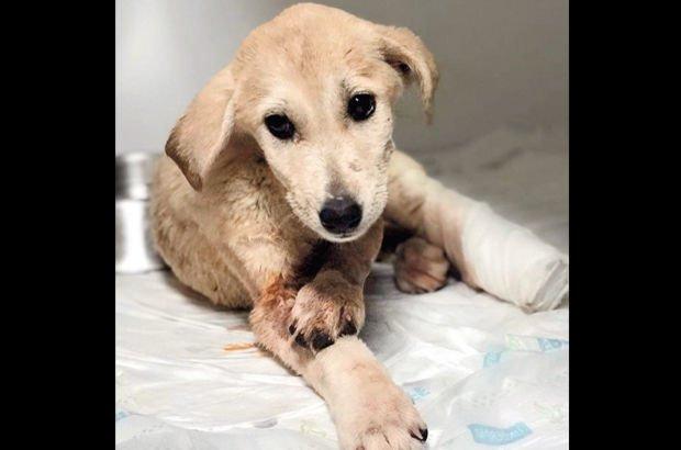 Sapanca'daki yavru köpek vahşeti şimdi de Mardin'de yaşandı!