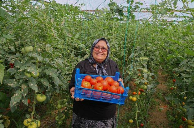 Domates ihracatçısı Fatma Konu