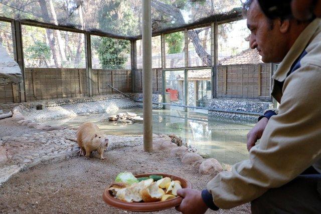 Hayvanat bahçesinin gözdesi 'Trump'