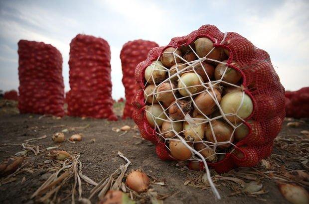 İşte soğanın tarla fiyatı
