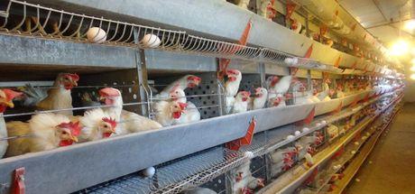 Son Dakika: Türk gıda devinden konkordato açıklaması Konkordato nedir?