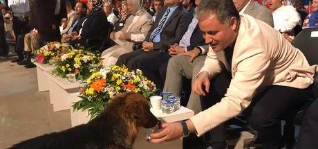15 Temmuz anma programında vekilden örnek davranış! Köpeğe eliyle su içirdi