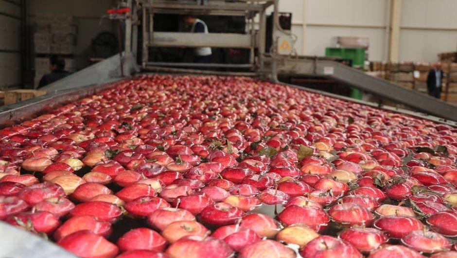 Elma ihracatı tam 87 kat attı