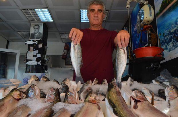 balık, palamut