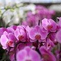 Orkide bitkisi bakımında nelere dikkat edilmeli?
