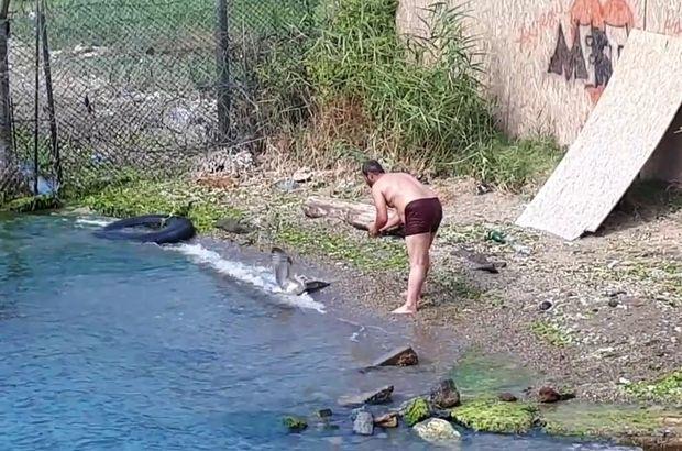 Son dakika: Sarıyer'de misinaya dolanan martıyı balıkçılar kurtardı