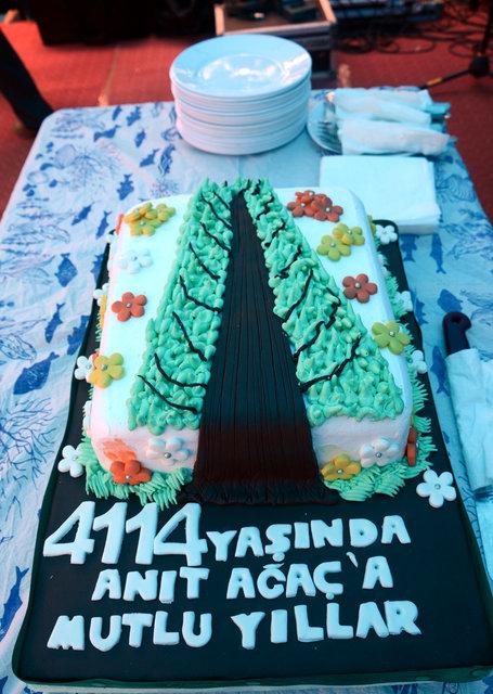 En yaşlı porsuk ağacına doğum günü pastası