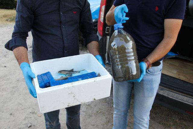 Domaniç'te toplu balık ölümleri
