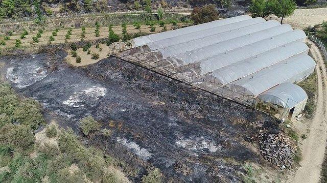Antalya'da yangının ardından ürküten manzara