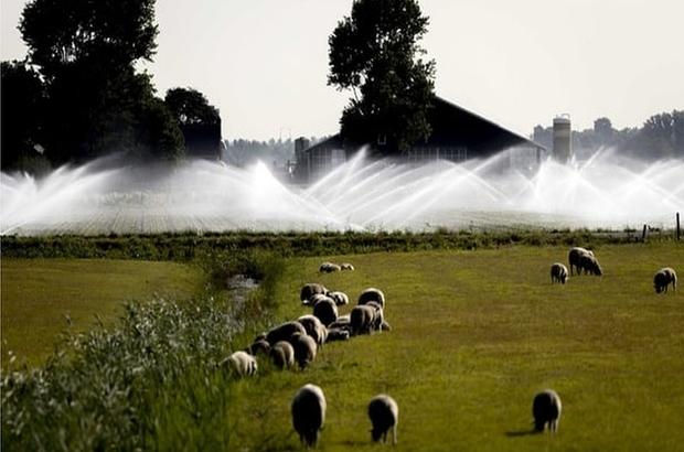 Hollanda'da ilk kez cami ve kilise görevlileri 'yağmur duasına' çıktı
