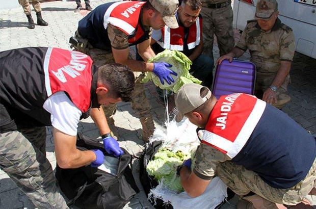 Van'da, yolcu otobüsündeki lahanadan 15 kilo eroin çıktı