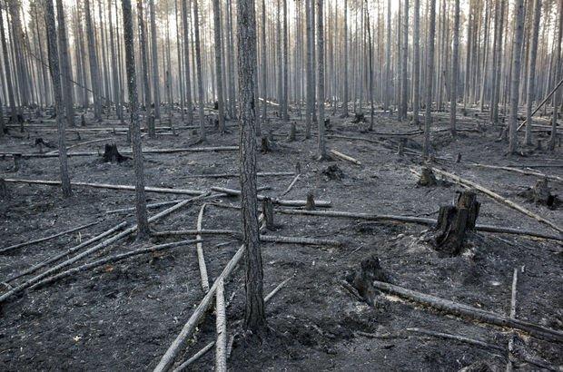 İsveç'te orman yangınına bombalı müdahale