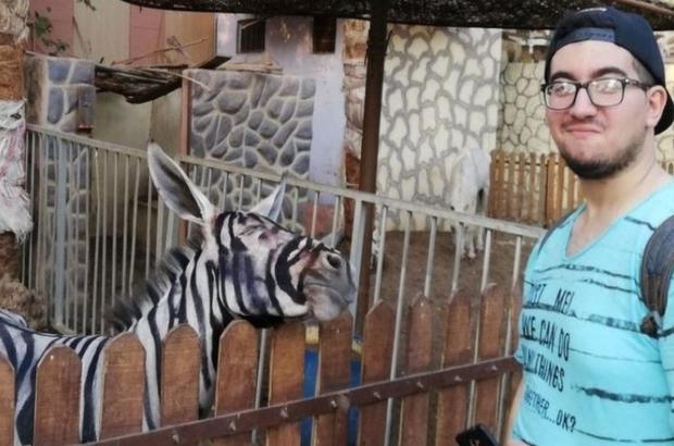 'Zebra görünümlü eşek' paylaşımı Mısır'da viral oldu