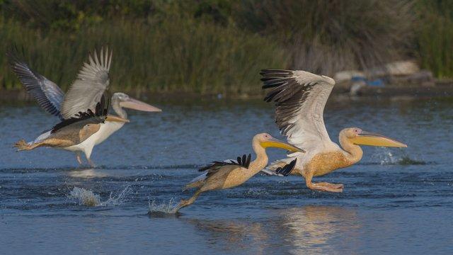Kuşların sonbahar göçü fotoğraflara böyle yansıdı