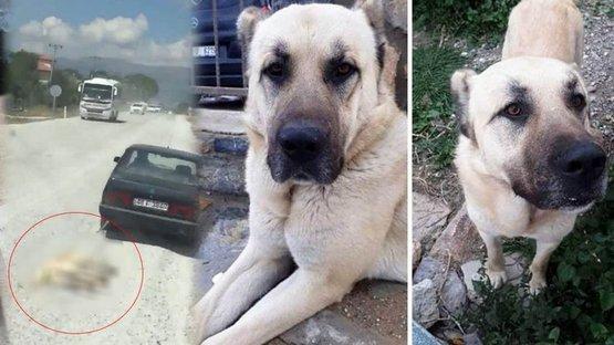 Hayvanı otomobile bağlayıp metrelerce sürüklemişti! O köpeğin gerçek sahibi ortaya çıktı