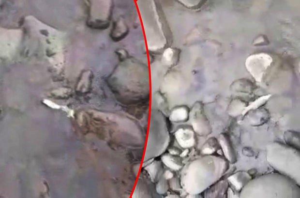 Araklı'da balık ölümleri vatandaşları isyan ettirdi