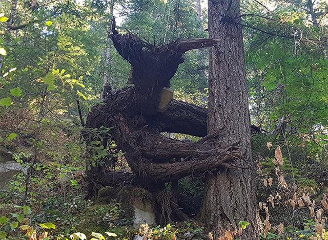 Birbirinden tuhaf görünümlü ağaçlar