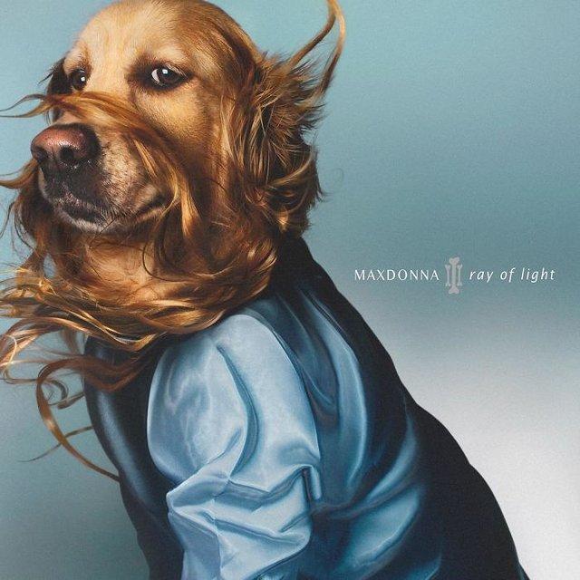 Madonna'yı taklit eden köpek internet dünyasını salladı