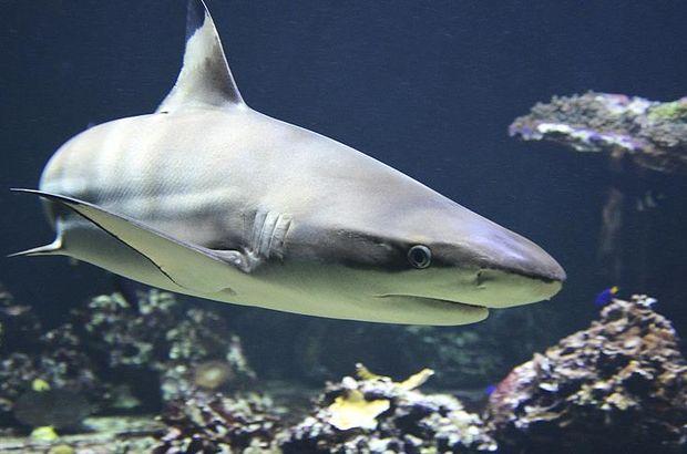 Şaka gibi olay! Köpek balığını bebek kılığına sokup çaldılar!