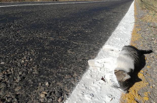 Yol çizgi çalışması yapan ekipler ölü kediyi de çizdi