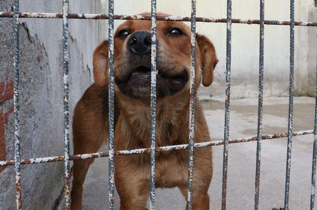 Manisa'da sahibinin şiddet uyguladığı köpek koruma altına alındı