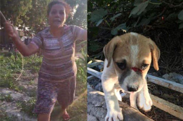 Kuşadası'nda köpeğe odunla saldırdı