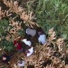 Cezaevi firarisi saklandığı mısır tarlasında drone ile yakalandı