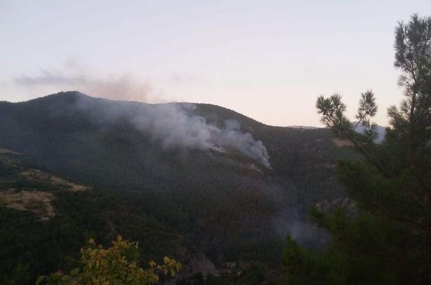 Hatay'da orman yangını! 7 hektarlık alanın zarar gördü