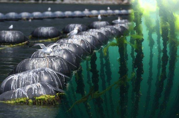 Denizin ortasında bir tarla! Sizce ne yetiştiriyorlar?