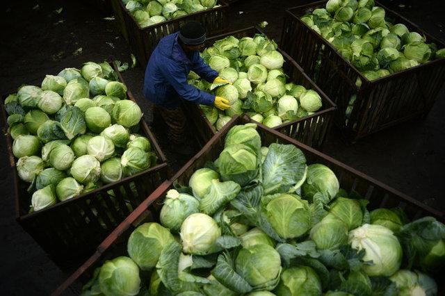 Bilim kanıtladı! Kanseri azaltan madde bu sebzelerde var!