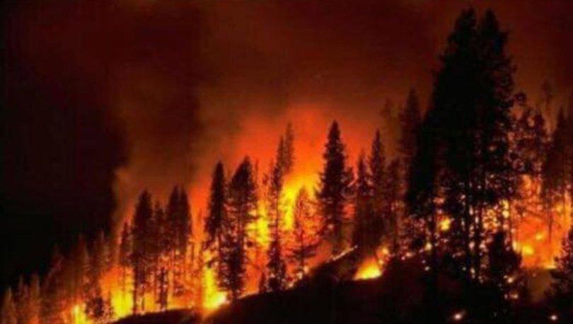 Kastamonu'da yangın! 20 dönümlük alan kül oldu