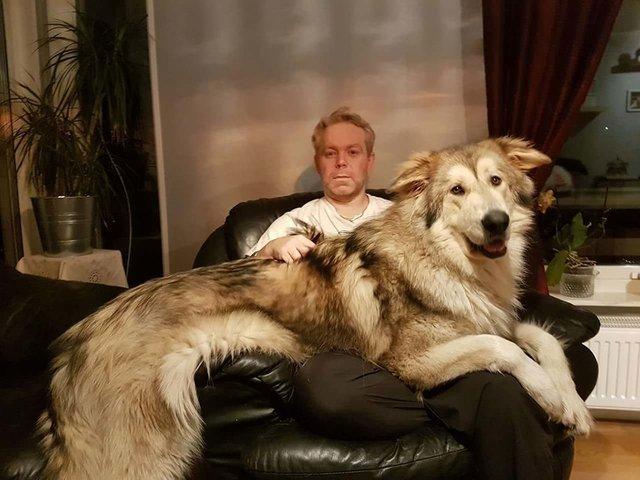 Sahiplerinden büyük köpeklerin güldüren halleri