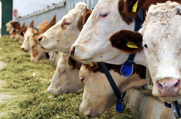 Hayvansal üretim istatistikleri