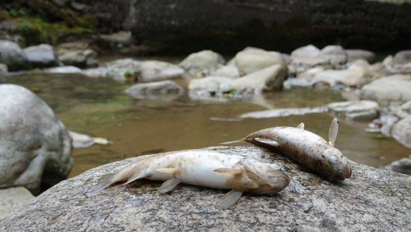 Topladıkları balıkları toprağa gömdüler
