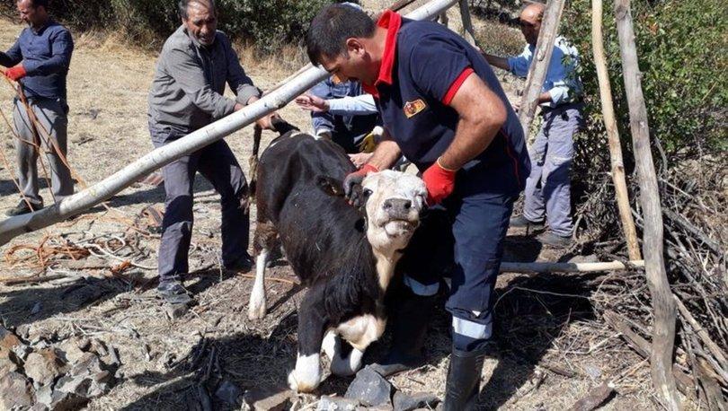 Bingöl kuyuya düşen inek Selim Oğultekin