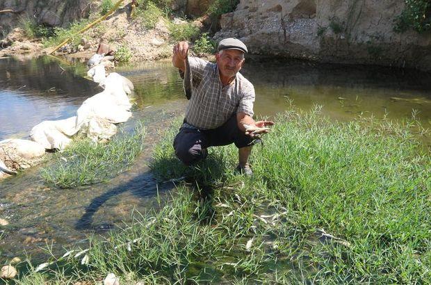 Mersin'de balık ölümleri korkuttu!