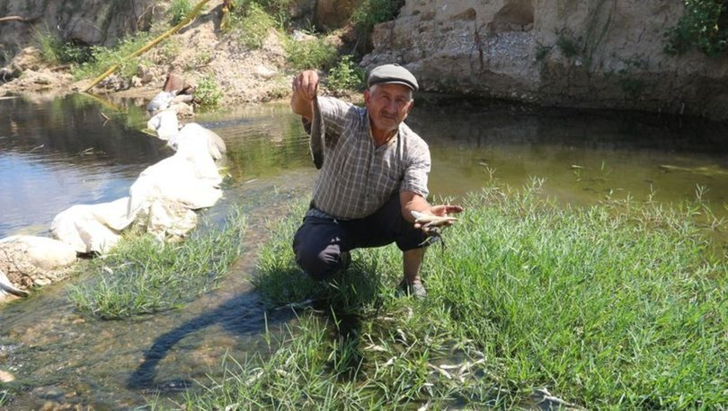 Mersin'de balık ölümü
