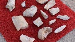 Kayseri'de çoban buldu! 7,5 milyon yaşında
