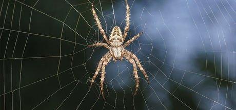 Bir örümcekle kabusu yaşadı! Bacağı kesilmişti, kötü haber geldi!