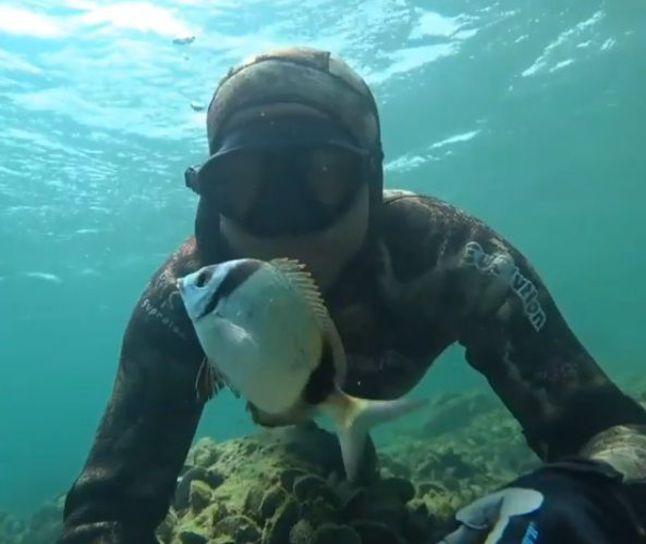 Oltaya yakalanan balığı kurtardı ile ilgili görsel sonucu